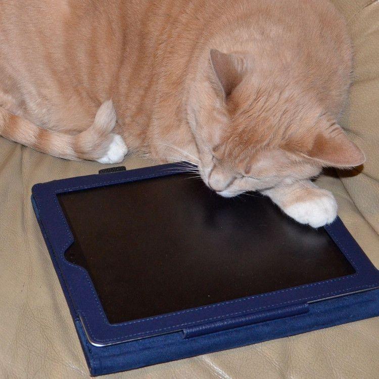 タブレットと猫