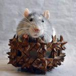 「使いやすいマウス」ってどんなの?ご意見お待ちしてます!