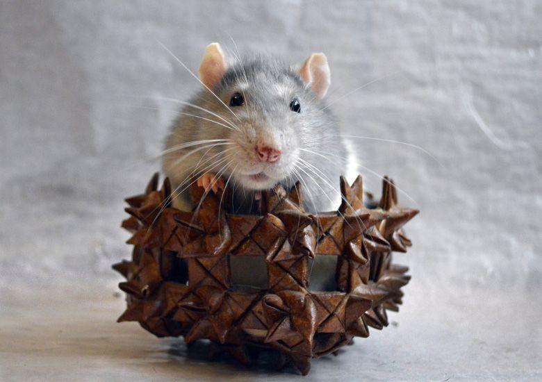 かわいいマウス