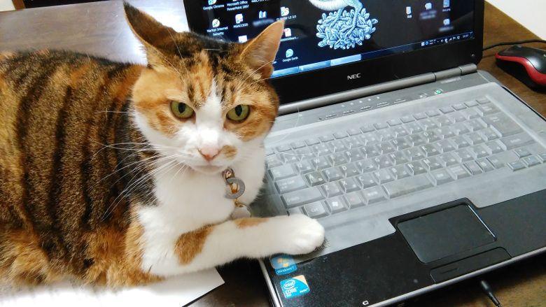 natsuki宅のネコ