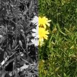 「ディープネットワークを用いた白黒写真の自動色付け」― モノクロ写真をカラーにする人工知能で遊んでみた(natsuki)