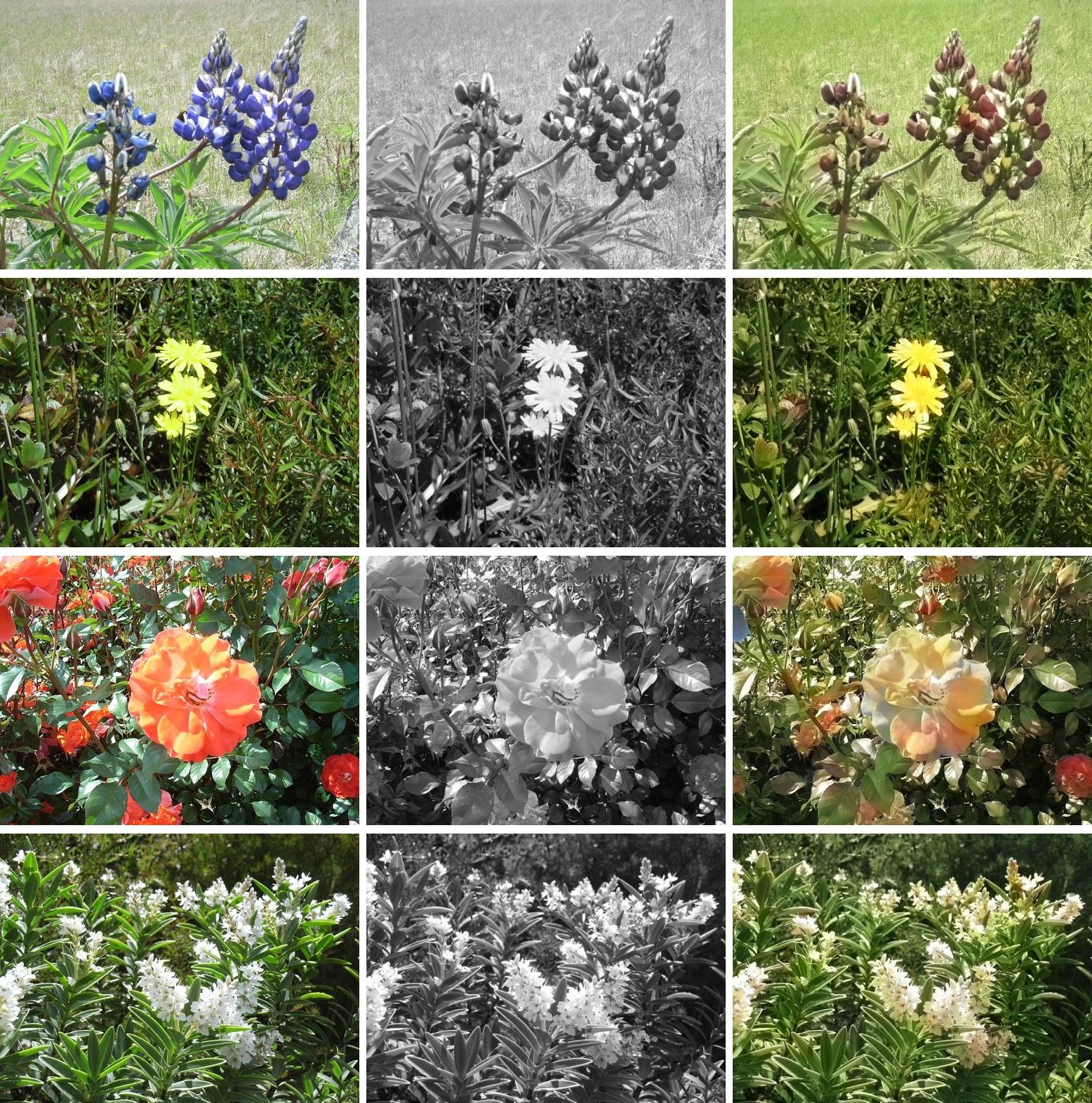 AIC 花の写真