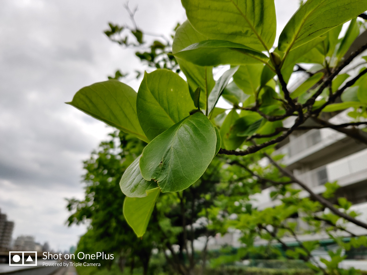 OnePlus 7 Pro レビュー 花の撮影