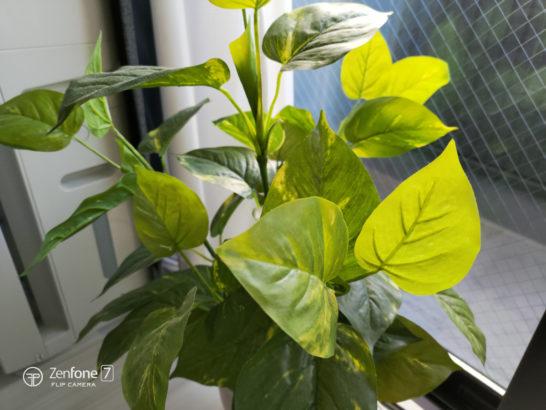 zenfone7_photo_plant